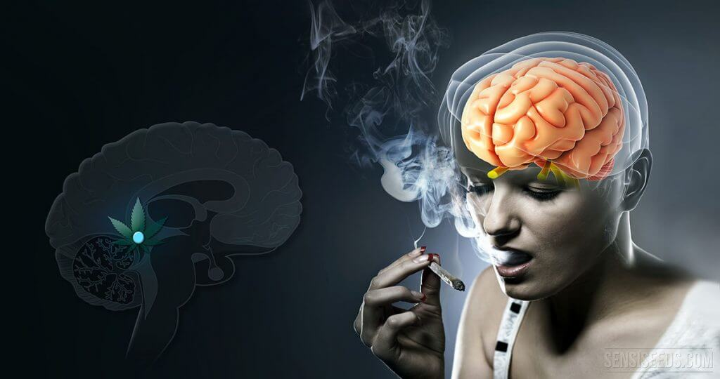 Successful stoners understand weed's metaphysical benefits
